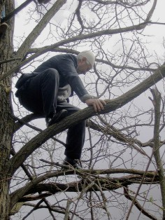 old man in tree
