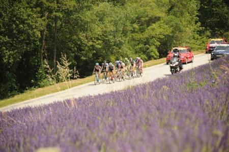 2013 Tour de France lavender